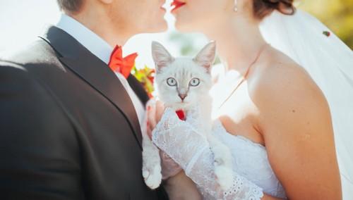 キスをする新郎新婦の間に抱かれる猫