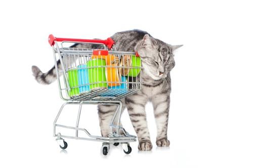 カートにすりすりする猫