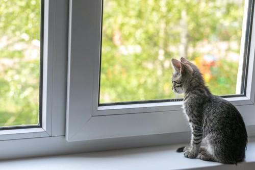 座って窓の外を見る子猫