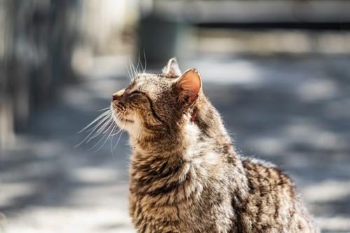 気持ち良さそうな老いた猫