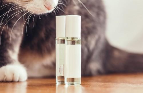 香水の香りを嗅ぐ猫