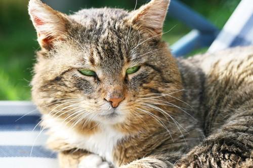 目を細めて視線をそらす猫