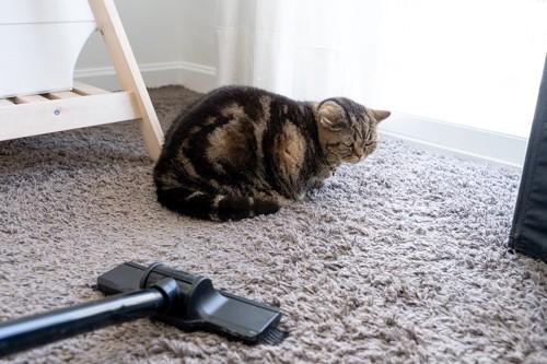 掃除機を見つめる猫