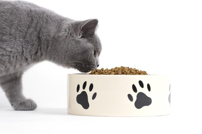 ドライフードを食べる猫