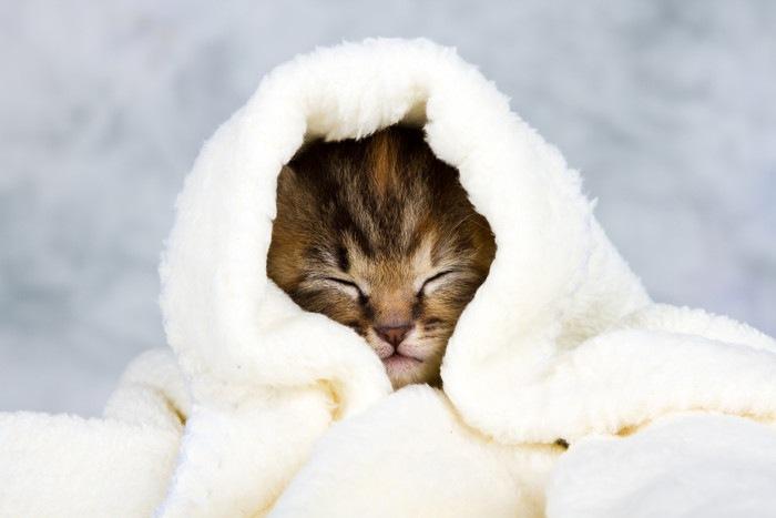 白いタオルにくるまる子猫