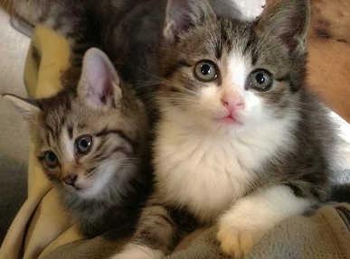 2匹の猫達