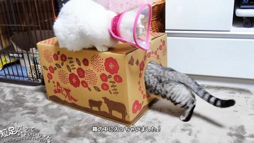 箱に中に入る猫