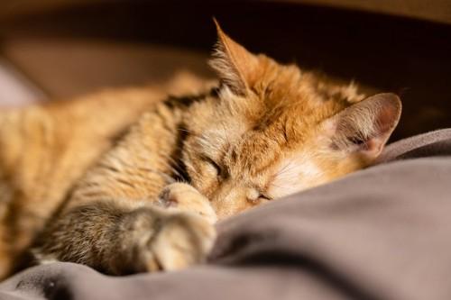 毛布の上で気持ちよさそうに寝る猫