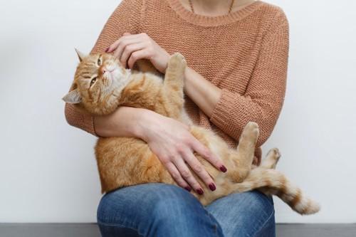 抱っこされて顔を触られている猫