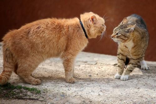 喧嘩が始まりそうな二匹の猫