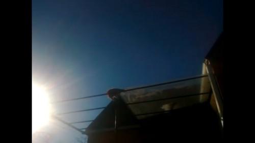 屋根の上に猫