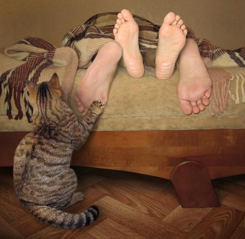 足を引っ掻いて起こす猫