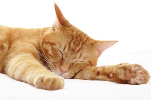 眠っている茶トラ猫