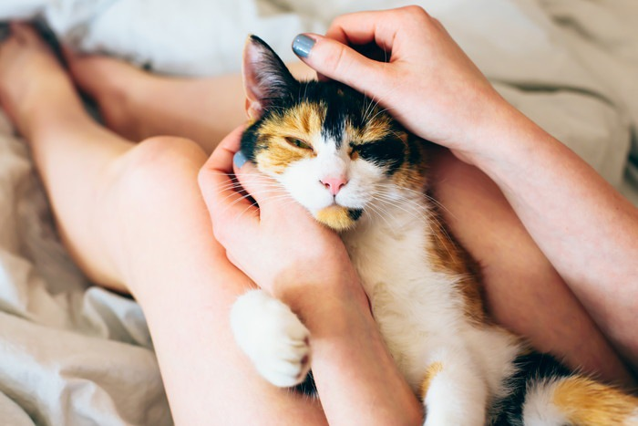 撫でられて気持ちよさそうにする猫