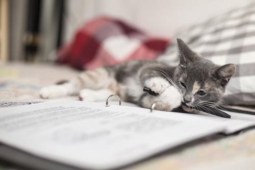 ノートの上に寝転がりペンを齧る猫