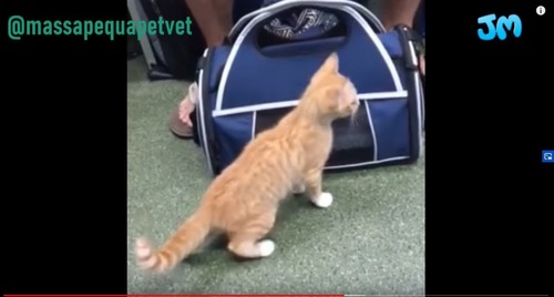 バッグの前に立つ猫