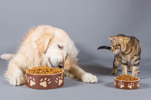 並んでご飯を食べるラブラドールとキジトラ猫