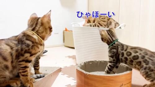 カゴの中の猫を見る猫たち