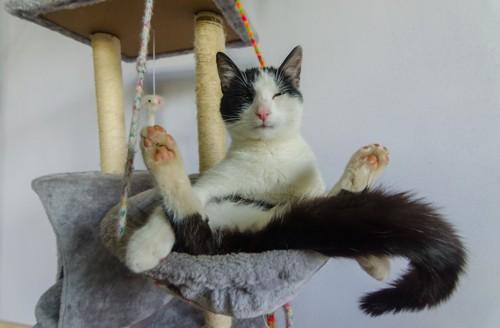 キャットタワーの上で足を広げて座る猫