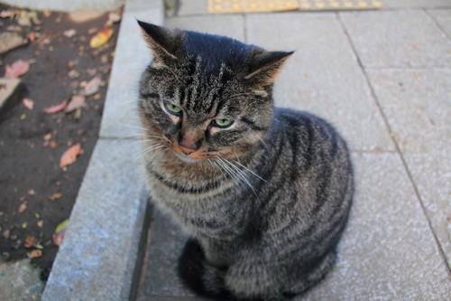 不機嫌そうな顔をして座っている猫