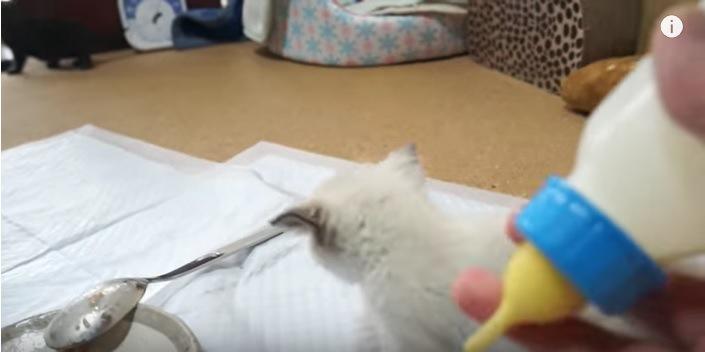 子猫の後ろ姿とミルク