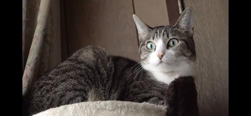 なにかを見ている猫