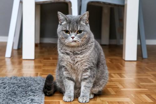 唇を嚙みしめるような表情で座っている猫