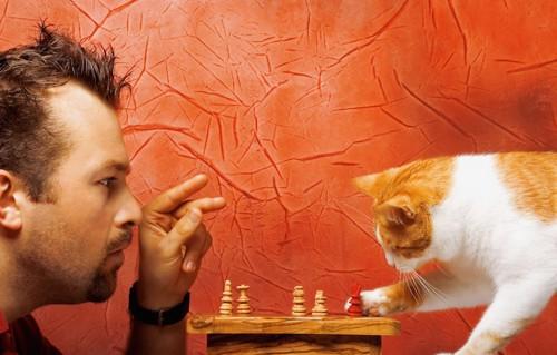 チェスをする男性といたずらをする猫