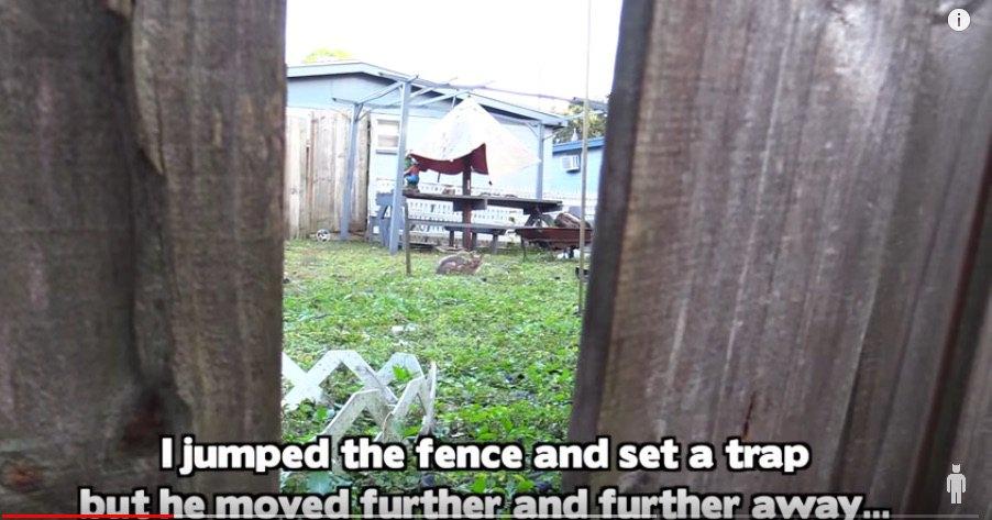 フェンス越しに見える猫