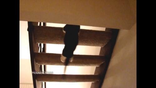 表に戻る猫