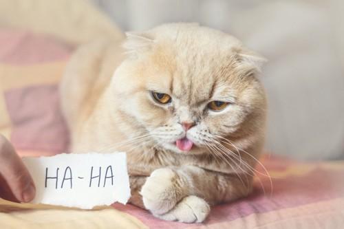 クリームの猫