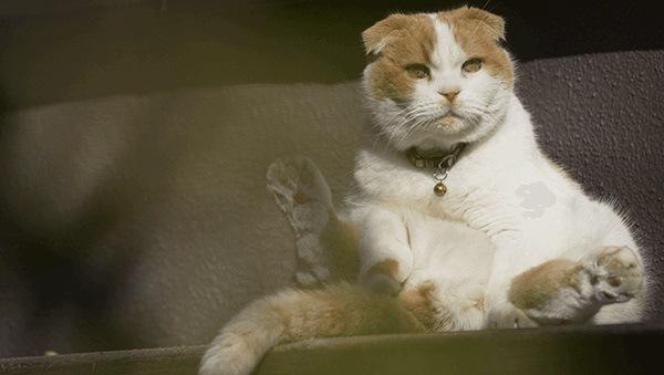 スコ座りする猫まる