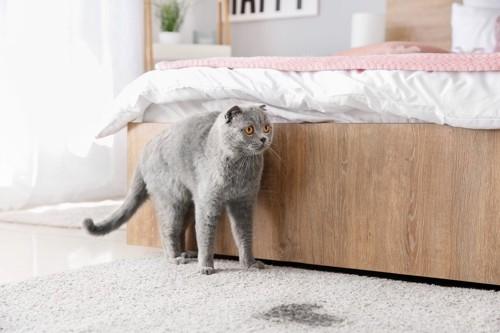 粗相をした猫