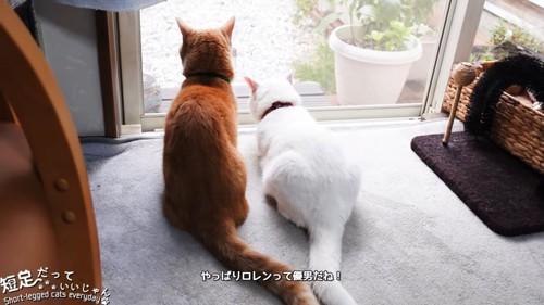 並ぶ茶色の猫と白猫