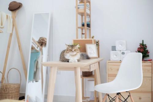 テーブルの上の猫