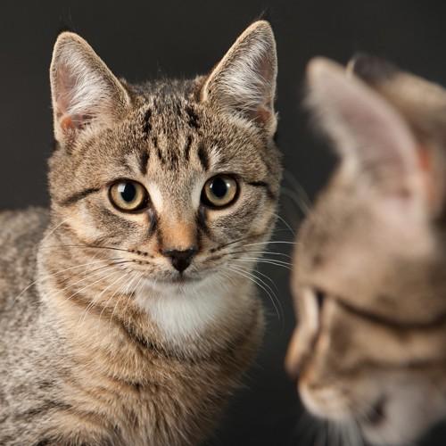 こちらをみている猫