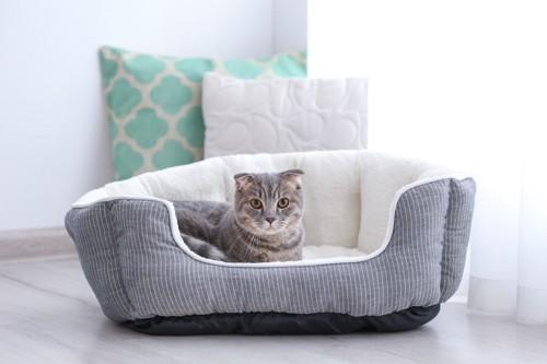 猫用ベッドに入ってこちらを見る猫