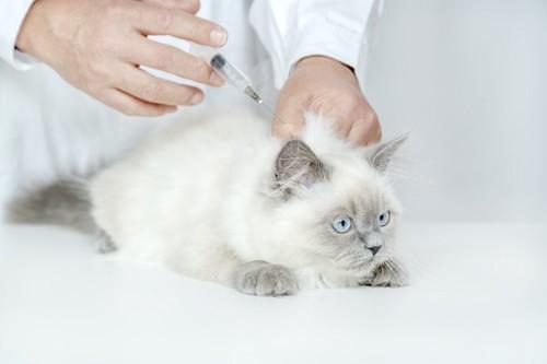 病院でワクチンの摂取をする子猫