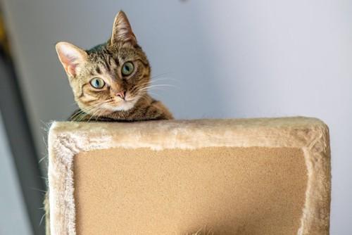 椅子の向こうから見る猫