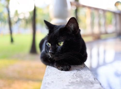 目をそらす黒猫