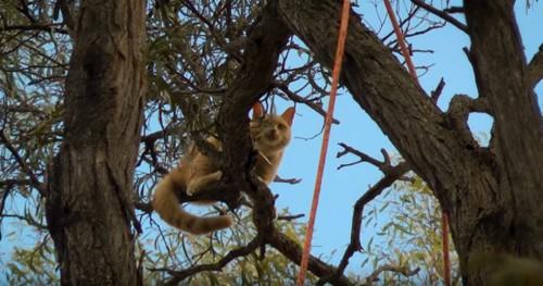 木の枝でうずくまる猫