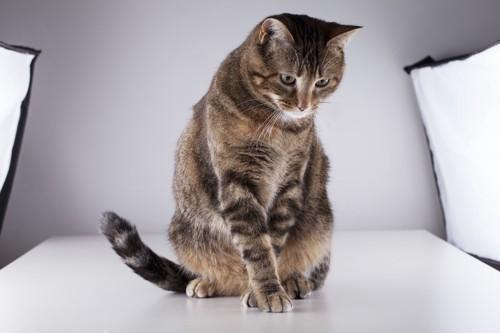 スタジオにいる猫