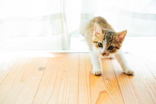上を覗き込む猫