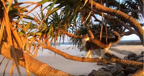気に登る猫