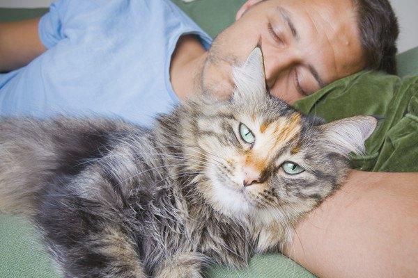 男性と一緒に寝る猫