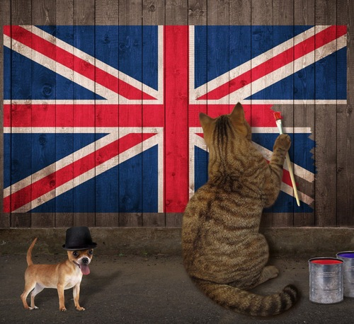 The funny cat patriot with his dog in a bowler hat draws the flag United Kingdom on the old wooden fence.