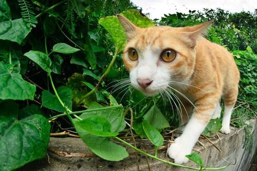 散歩中の野良猫