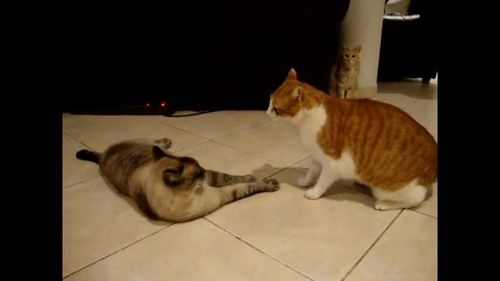 奥からも猫