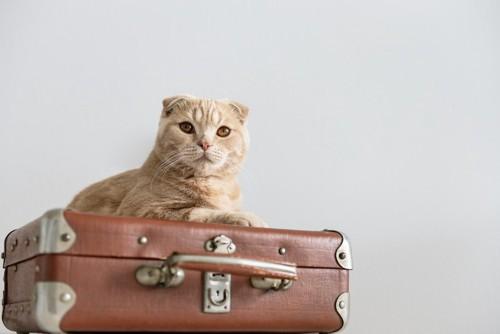 スーツケースの上にいる猫