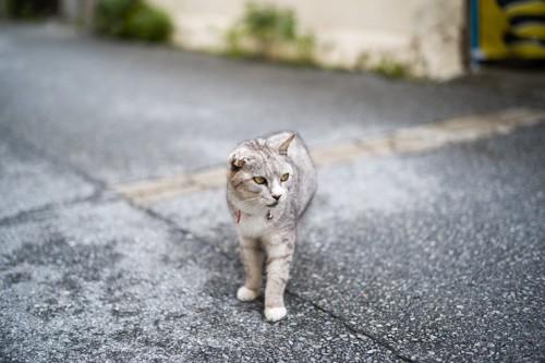 迷っている猫